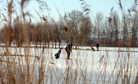 Golf in de winter
