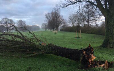 Onderhoud en kap van bomen start vanaf 11 januari